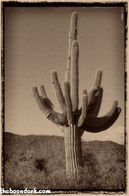 Old Saguaro cactus Ben Avery's campground Phoenix Arizona
