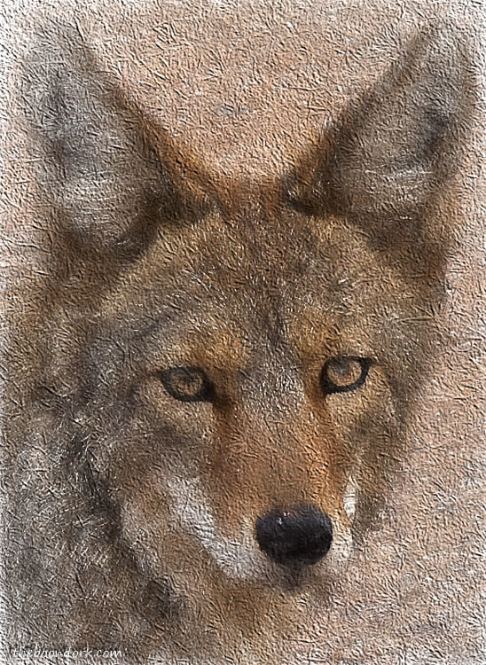 Photoshop painting of a coyote