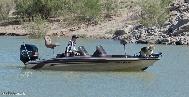 A fishing dog at elephant Butte State Park New Mexico
