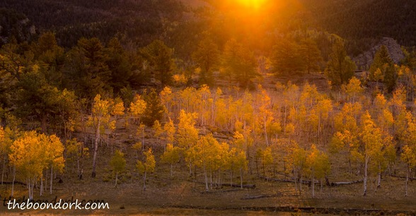 Autumn leaves Colorado Picture