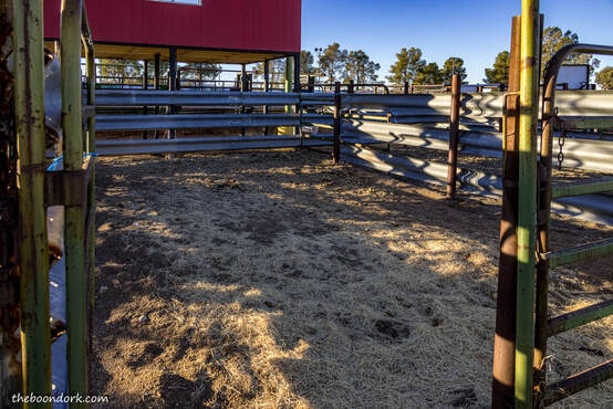 Rough stock pen rodeo grounds Picture