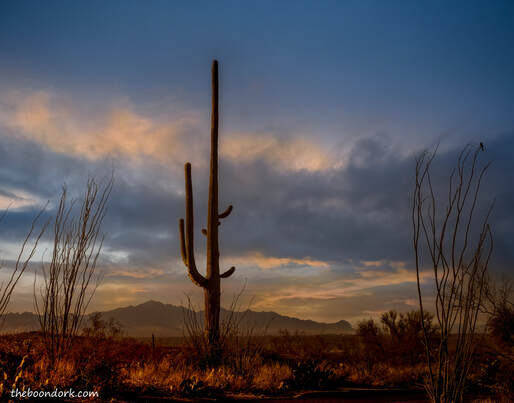Saguaro national Park East Tucson Arizona Picture