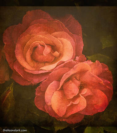 Faded roses Picture