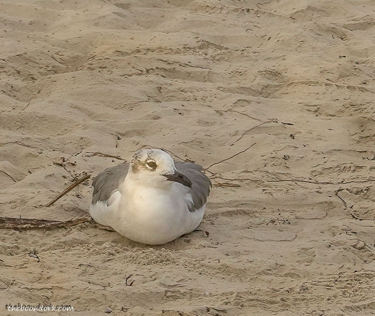birds stuck in the sand