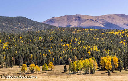 Fall colors Colorado Picture