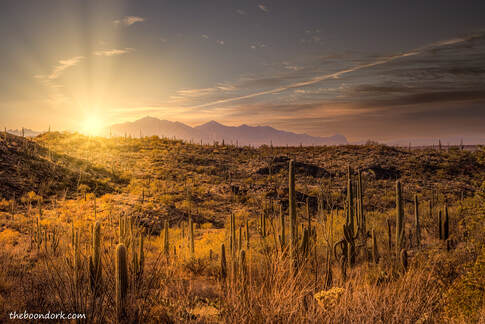 Saguaro national Park Picture